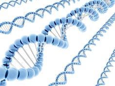 модель ДНК человека