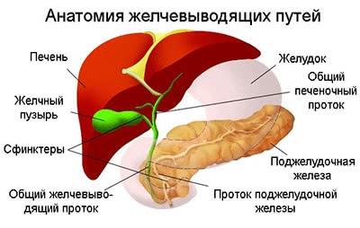 Лечение рака желчных протоков в Израиле, лечение холангиокарциномы в Израиле