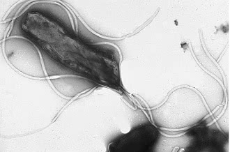 бактерии