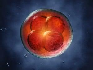 Стволовые клетки, лечение стволовыми клетками в Израиле